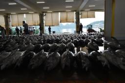 Mercado de Atum