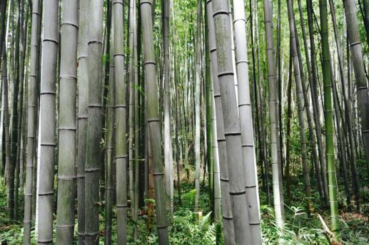 bambu10