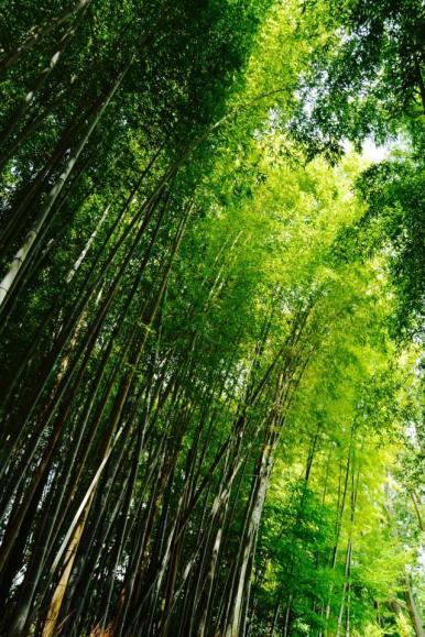 bambu4