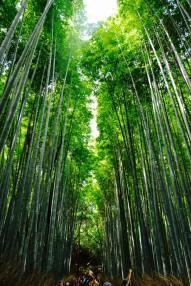 bambu7