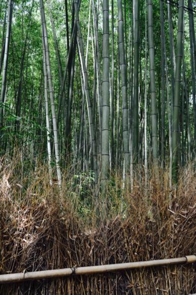 bambu8