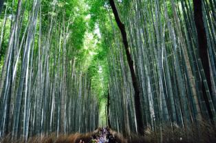 bambu9