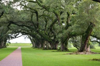 oak18