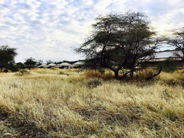 Acacia Central Camp10