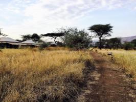 Acacia Central Camp24