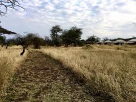 Acacia Central Camp28