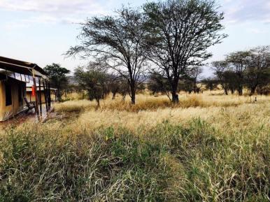 Acacia Central Camp29