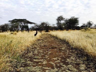 Acacia Central Camp30