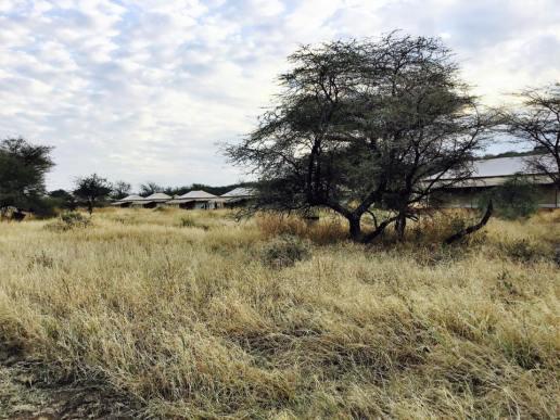 Acacia Central Camp31
