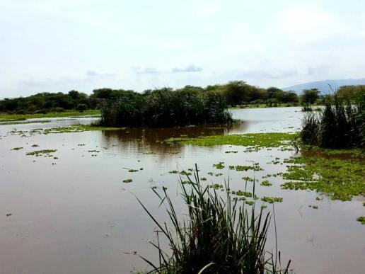 Lake Manyara 10