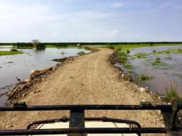 Lake Manyara 11