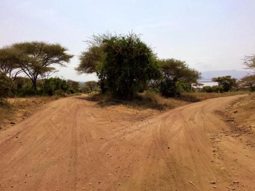Lake Manyara 4