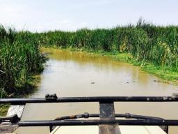 Lake Manyara 6