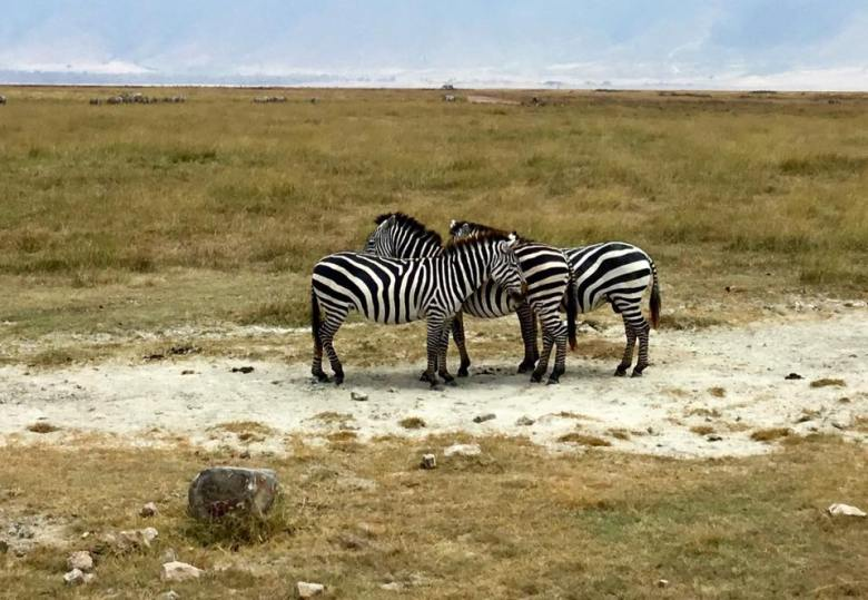 Ngorongoro14