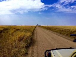 Serengeti Central1