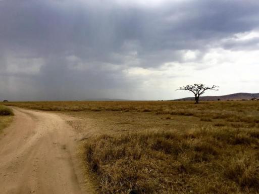 Serengeti Central10