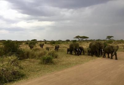 Serengeti Central12