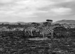 Serengeti Central19