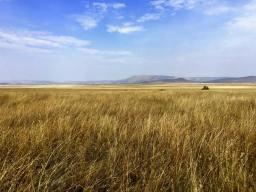 Serengeti Central2