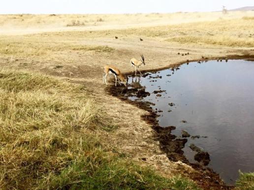 Serengeti Central21