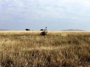 Serengeti Central22