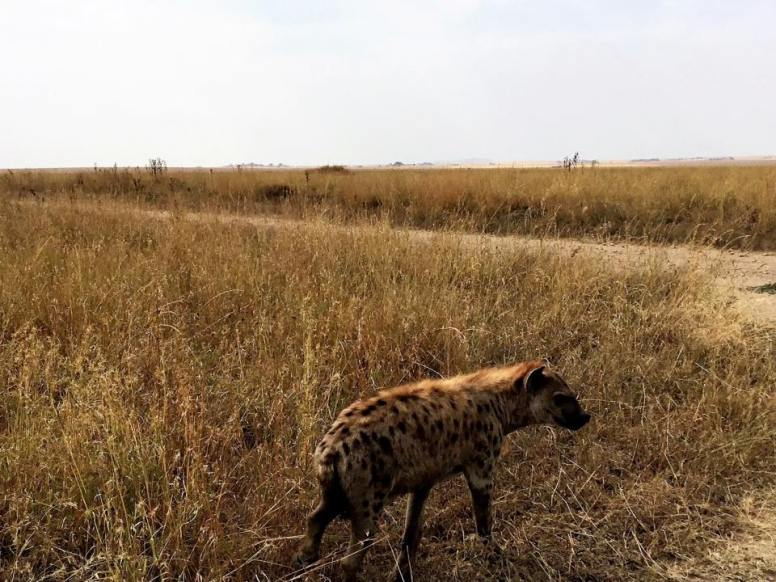 Serengeti Central3