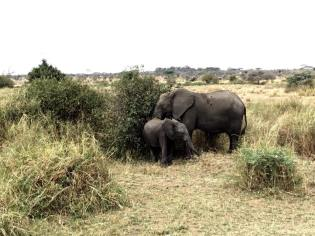 Serengeti Central6