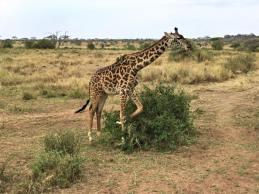 Serengeti Central7