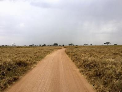 Serengeti Central8