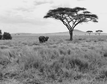 Serengeti Central9