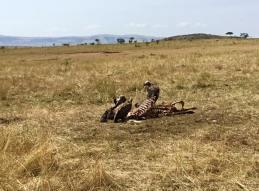 Serengeti North17