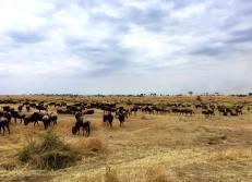 Serengeti North2