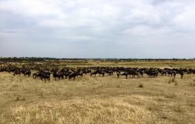 Serengeti North3