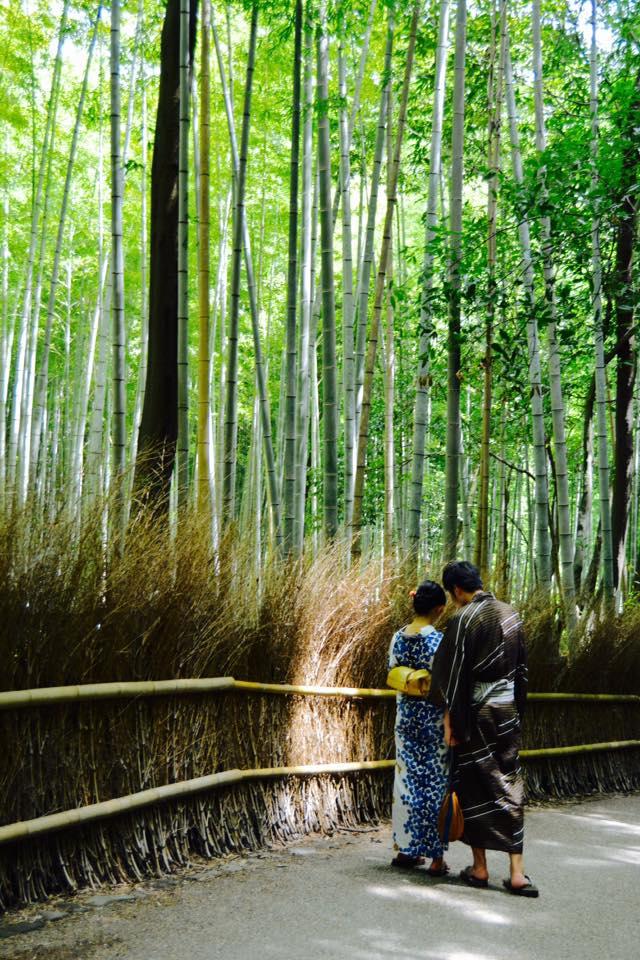 bambu6